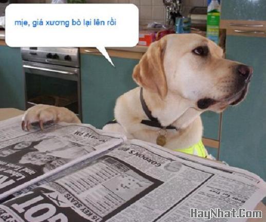 Nỗi buồn của… chó !