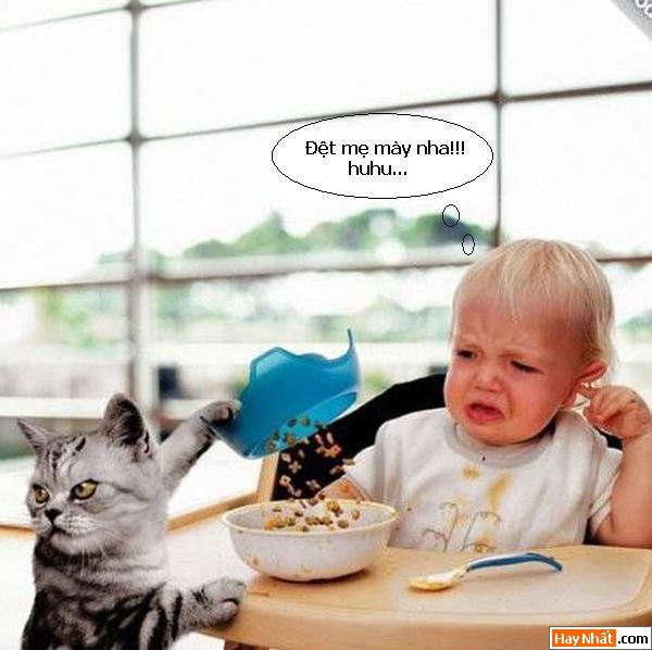 Các chú mèo đáng yêu :)