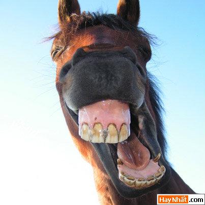 Hình vui, Hình ảnh vui, hình cực vui, Tranh vui, hình hài hước, ảnh hài hước, Bush, Ngựa, Con ngựa, Nón, Mũ, Baby, Con nít, Em bé, Trẻ con, Chó, Mèo