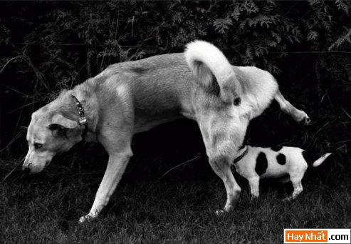 Cười bò lăn với các chú kún