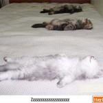 Mèo thật hài hước