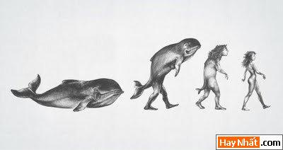 Sự tiến hóa của loài người qua các thời kỳ