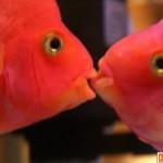 Cá cũng biết.. hôn!