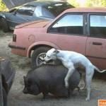 Động vật: Cuồng dâm nổi loạn