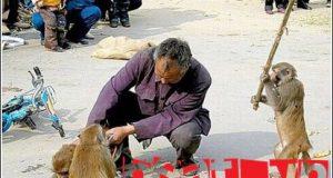 Rắc rối với động vật