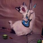 Năm Mão cười chuyện Mèo