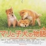 Chuyện về Mari và 3 chú cún nhỏ