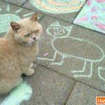 Vẽ ta xấu thế nhóc!!
