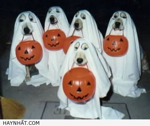 nhung-hinh-anh-halloween-kinh-dien-8