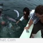 Cá Mập Lên Bờ