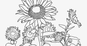 Tranh tô màu các loại hoa cho bé tập tô màu cực kì dễ thương