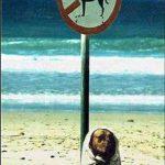 Chó cải trang!!