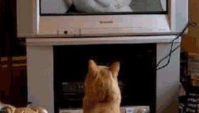 Phim SEX của mèo